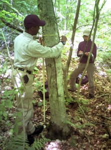 scientists in forest